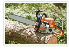 Land Clearing, Brush Removal, and Chainsaw Work Services | Southbury, Connecticut
