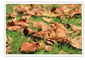 Fall Landscape Clean Up Services, Yard Debris Removal | Southbury, CT