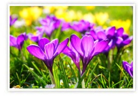 Spring Landscaping and Lawn Care | Southbury, Connecticut