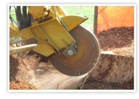 Tree Removal & Stump Grinding Services | Southbury, Fairfield, CT